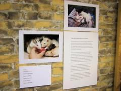 """Ausstellung """"(Un)heimliche Tiere in Haus und Garten"""""""
