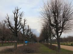 Baumarbeiten im Schloßpark 2007