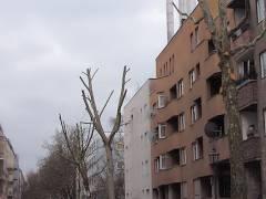 Baumschnittmaßnahmen in der Danckelmannstraße - Februar 2008