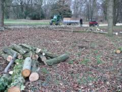 Baumfällungen im Schloßpark Februar 2007