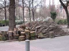 Baumfällungen auf dem Klausenerplatz