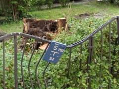 Reste eines umgestürzten Baumes an der Schloßstraße