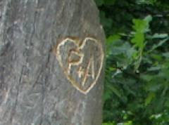 Baumstumpf mit eingeritzter Botschaft im Schloßpark Charlottenburg