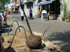 Baumpflanzaktion in der Seelingstraße - eine junge Linde liegt bereit
