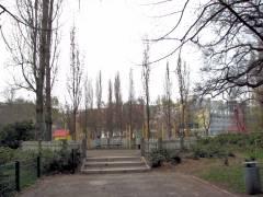 Frischgepflanzte Säuleneichen an einer Platzecke vom Klausenerplatz