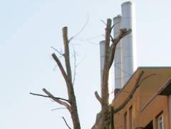 Bäume kastriert - Freiheit für das CO2