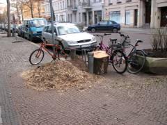 Arbeiten des Grünflächenamts Charlottenburg-Wilmersdorf - Entfernung von Baumstümpfen in der Nehringstraße