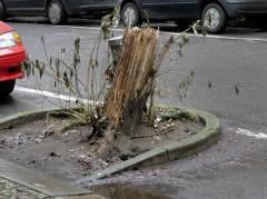 Baumstumpf in der Neufertstraße