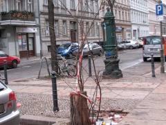 Gefällte Bäume im Kiez - 19.01.2009