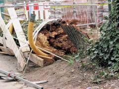 die Bruchstelle des umgestürzten Baums in der Schloßstraße