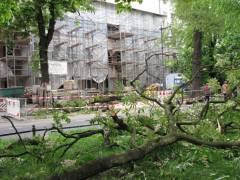 Bereits zersägte Baumreste auf dem Mittelstreifen der Schloßstraße