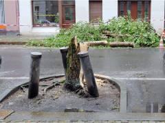 Umgestürzter Baum in der Neufertstraße