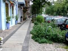 Straßen-/Gehwegbepflanzung in der Knobelsdorffstraße