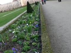 Frühlingsbepflanzung im Schloßpark Charlottenburg 2012