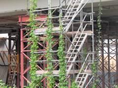 Abriss und Neubau der Spandauer-Damm-Brücke - eine kleine Randimpression - Natur holt sich mit der Zeit alles (zurück)