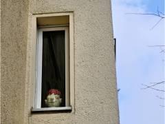 Fenstergucker kriegt Stielaugen
