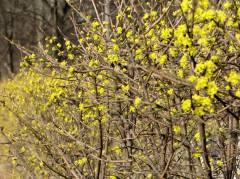 Frühling im Kiez am Klausenerplatz 2014