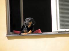 Was ist wohl draußen los? Hundewetter oder Sonnenschein?