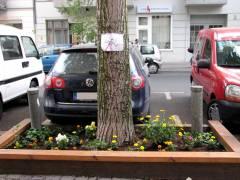 Blumendiebstahl in der Nehringstraße