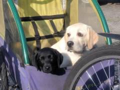 Was für ein komfortables Hundeleben im Kiez - z.B. auf dem Klausenerplatz
