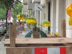 Sonnenblumen am Klausenerplatz