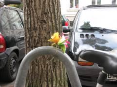 Ökokiez - bunter Blumen-Tupfer zwischen Blech und Stein