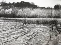 Helmut Newton sieht den Grunewaldsee / Foto vom Foto © Frank Wecker