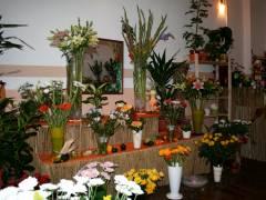 Eine bunte Blumen-Idylle