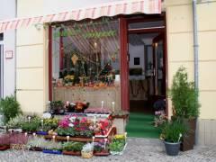 Blumen Idylle in der Danckelmannstraße