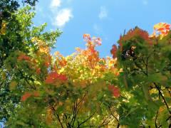 Herbstlaub im Schloßpark Charlottenburg