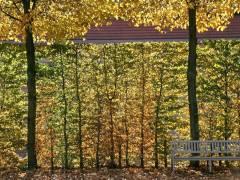 Herbst im Schloßpark Charlottenburg - Okt. 2013