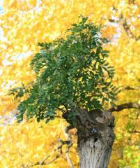 Herbst im Kiez 2010