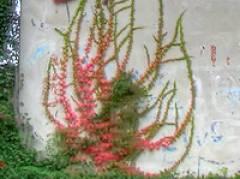 Herbst im Kiez - Oktober 2009