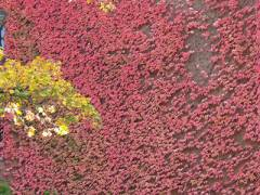Herbst im Kiezer Hinterhof