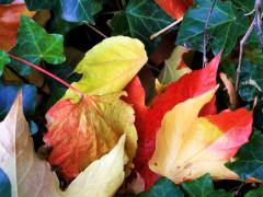Herbstblätter im Kiez