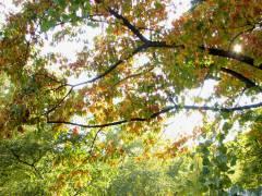 Herbst auf dem Klausenerplatz
