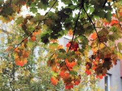Herbst im Kiez 2008