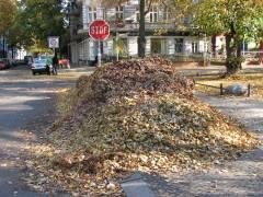 Herbstlaub in der Schloßstraße