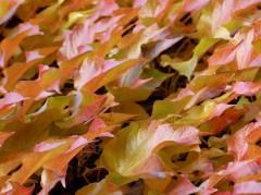 Herbst am Klausenerplatz