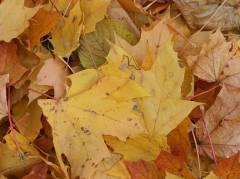 Herbst im Kiez