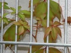 Herbst im Kiez 2011
