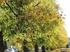 Herbst in der Schloßstraße