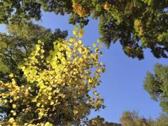 Herbstfarben im Schloßpark Charlottenburg