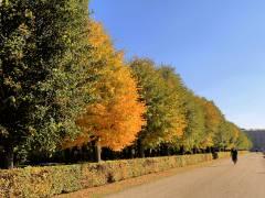 Herbstliche Mittagsfarben im Schloßpark Charlottenburg