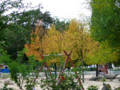 Buntes Laub im Kiez - September 2007