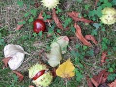 Kastanien in einem Hinterhof am Klausenerplatz