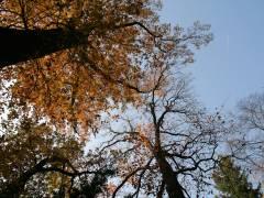 Herbst 2011 im Schloßpark Charlottenburg