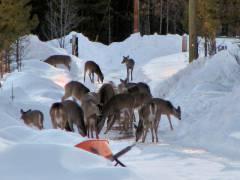 Chetwynd (British Columbia/Canada) / Foto © PD