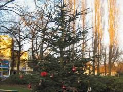 Weihnachtsbaum auf dem Klausenerplatz