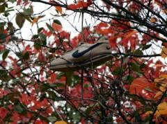 Herbst im Kiezer Hinterhof - mit verlorenem Schuh